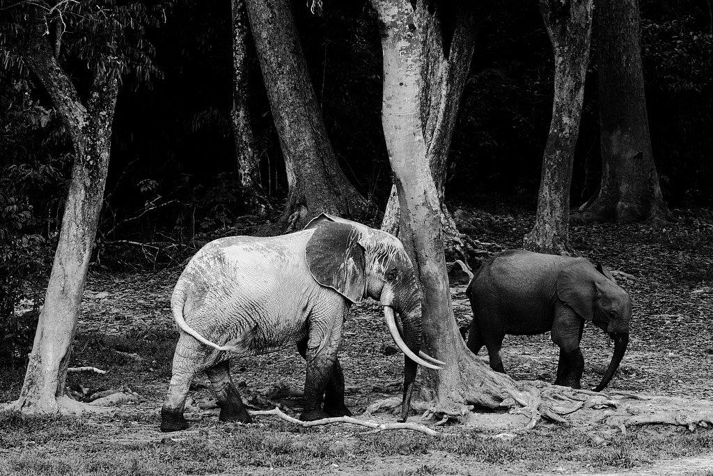 M06RCA0209-Elephants5002.jpg